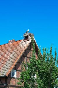 Ein Storch auf dem Dach eines Fachwerkhauses im brandenburgischen Rühstädt an der Elbe