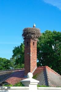 Ein Storch auf dem Schornstein eines Gebäudes der Burg Lenzen (Brandenburg)