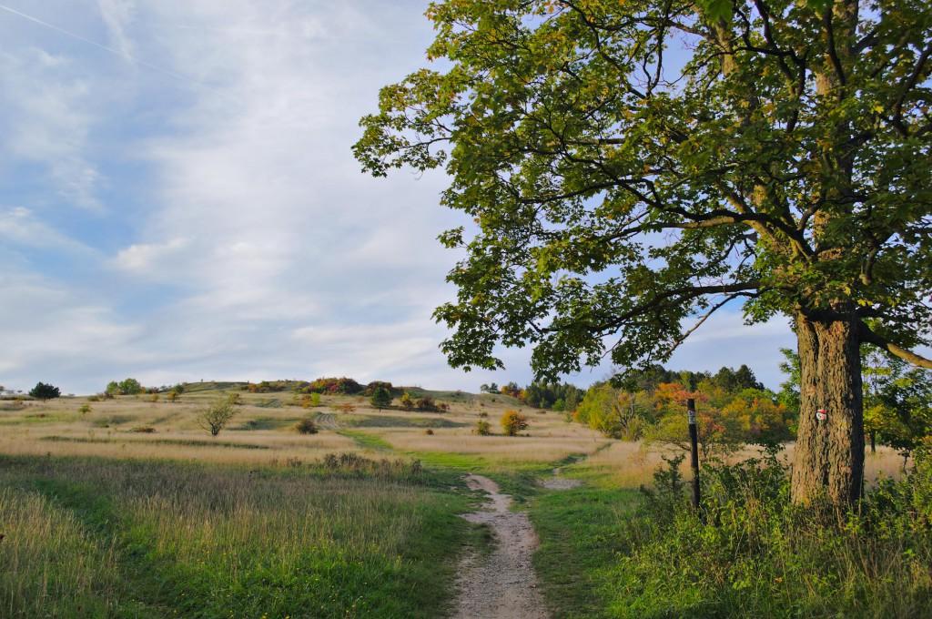 Ein Weg in das Naturschutzgebiet Windknollen mit dem Napoleonstein oberhalb von Jena.