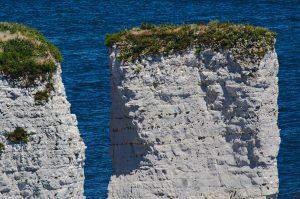 Ein dünner Grünstreifen auf einem Felsen der Old Harry Rocks. Man kann gut die einzelnen Schichten des Gesteins erkennen.