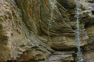 Felsschichten oberhalb der Teufelslöcher in Jena