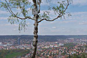 Blick auf Jena von einem Aussichtspunkt an der mittleren Horizontalen an den Kernbergen mit einer dünnen Birke im Vordergrund.
