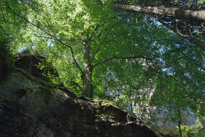 Ein Baum direkt an der Felskante etliche Meter über dem Wanderweg.