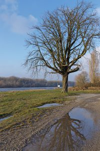 Der Rhein in der Nähe von Karlsruhe.