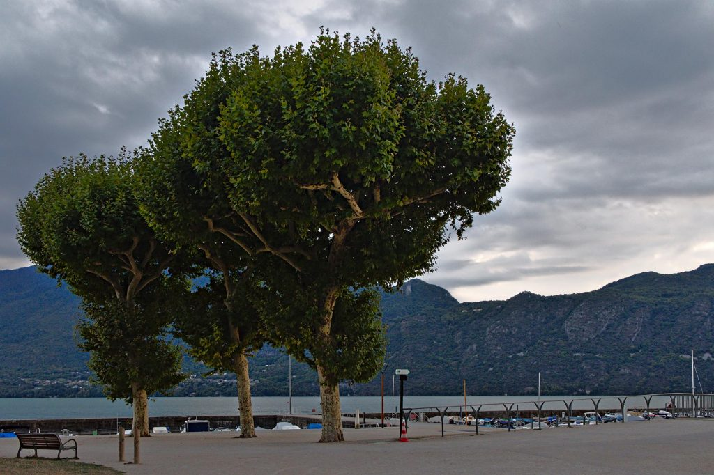 Bäume am kleinen Hafen von Aix-les-Bains